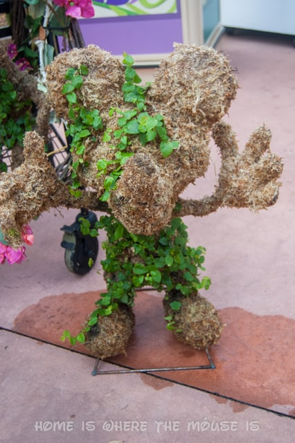 You can purchase a Mickey Mouse shaped topiary to grow in your own landscape